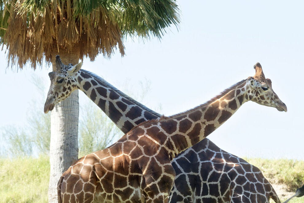 The living desert is more than a zoo