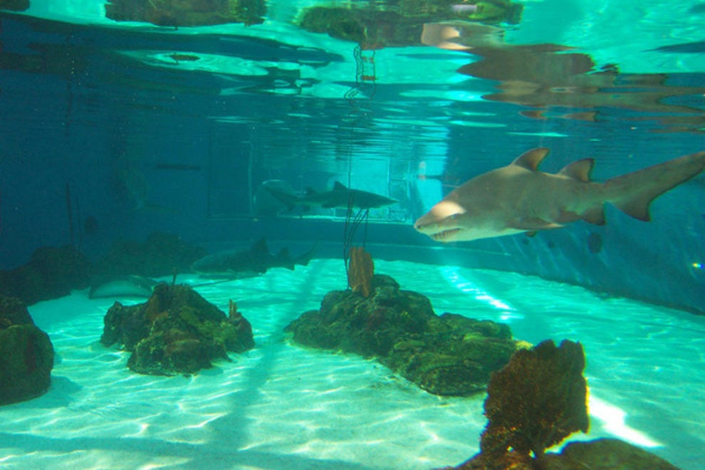 Aquarium Of The Pacific Orange County Attractions Review