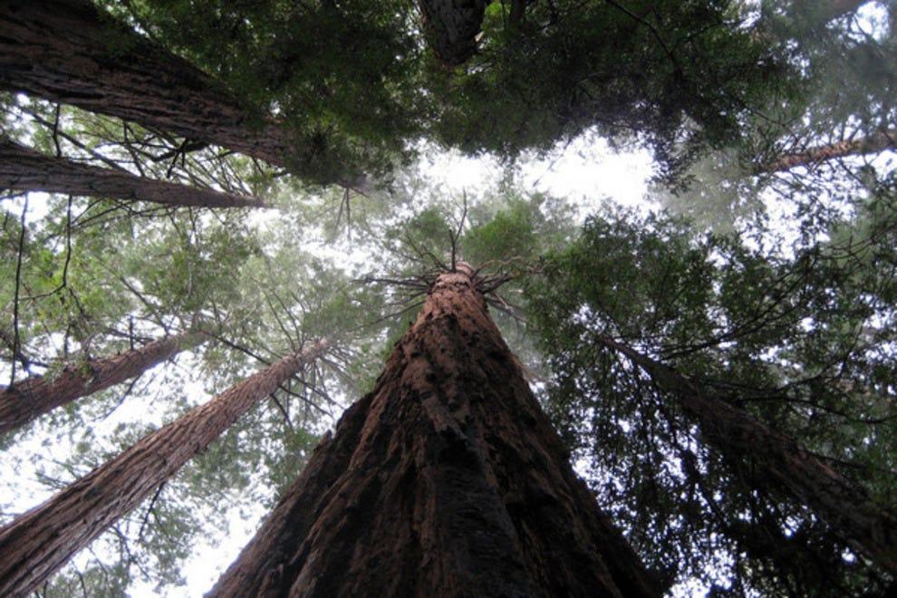 San Francisco Sightseeing 10best Sights Reviews
