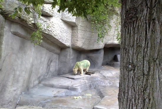 Look, a green polar bear!