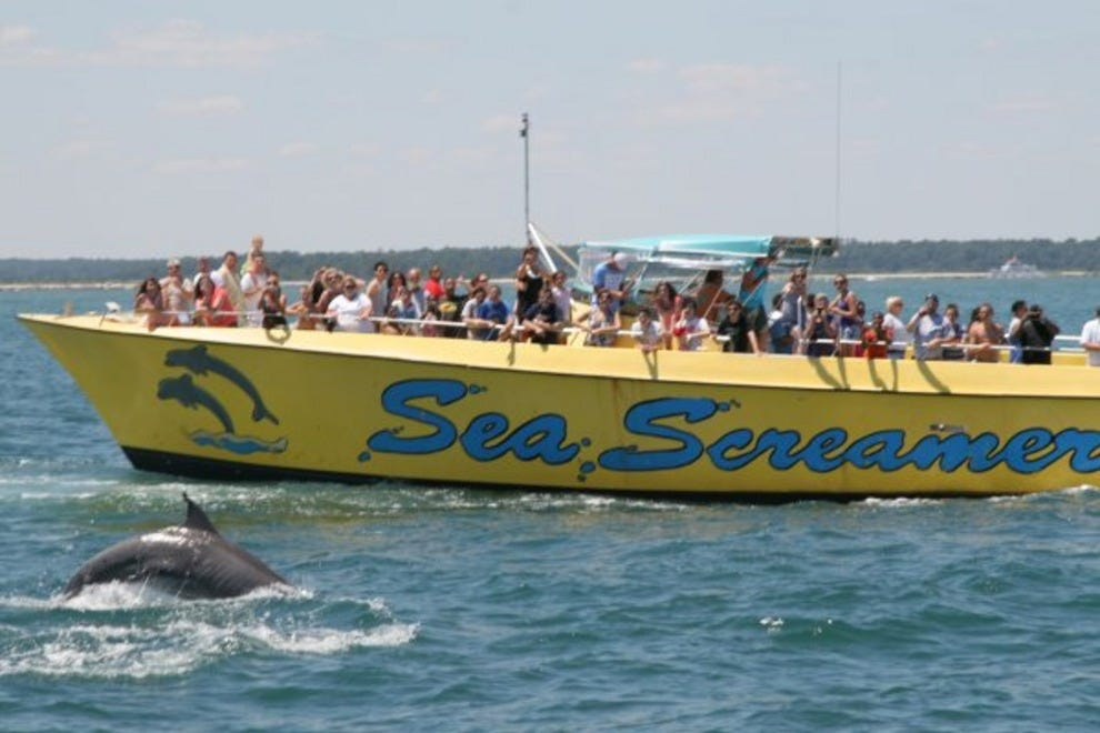 Dolphin Cruise Myrtle Beach Reviews