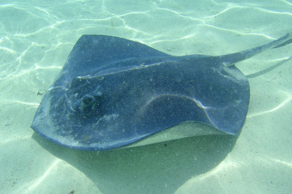 Blackbeard Cay Stingray Adventure