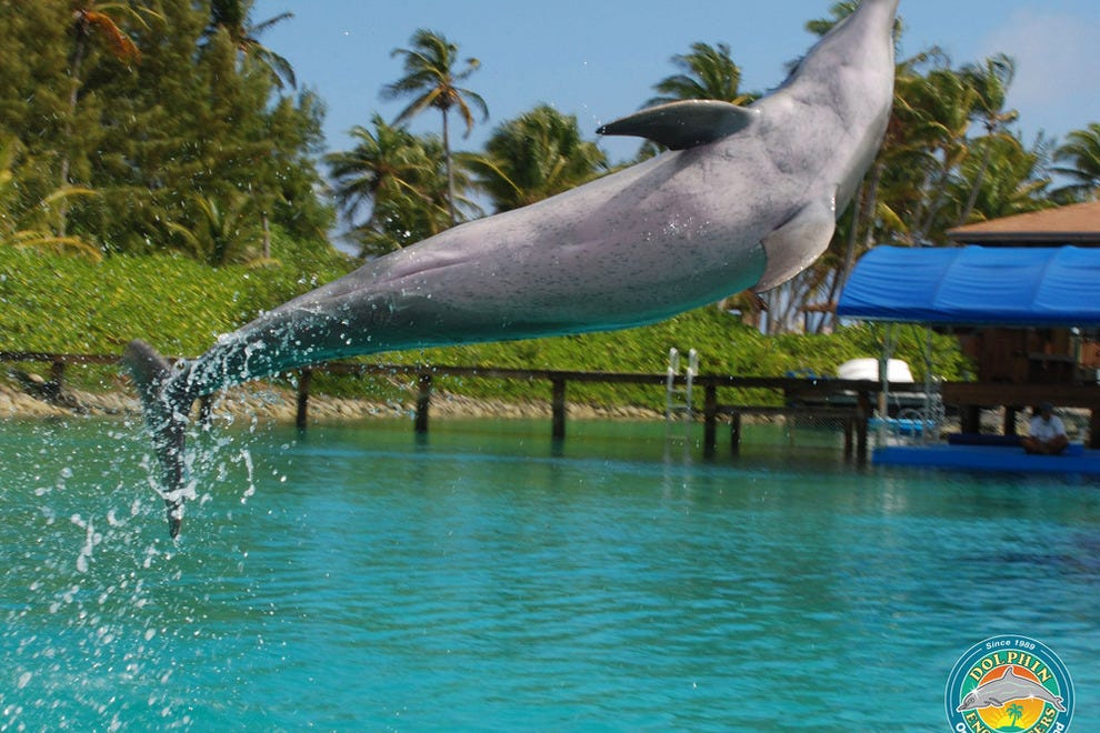 Blue Lagoon Island Dolphin Encounters: Nassau Attractions ...