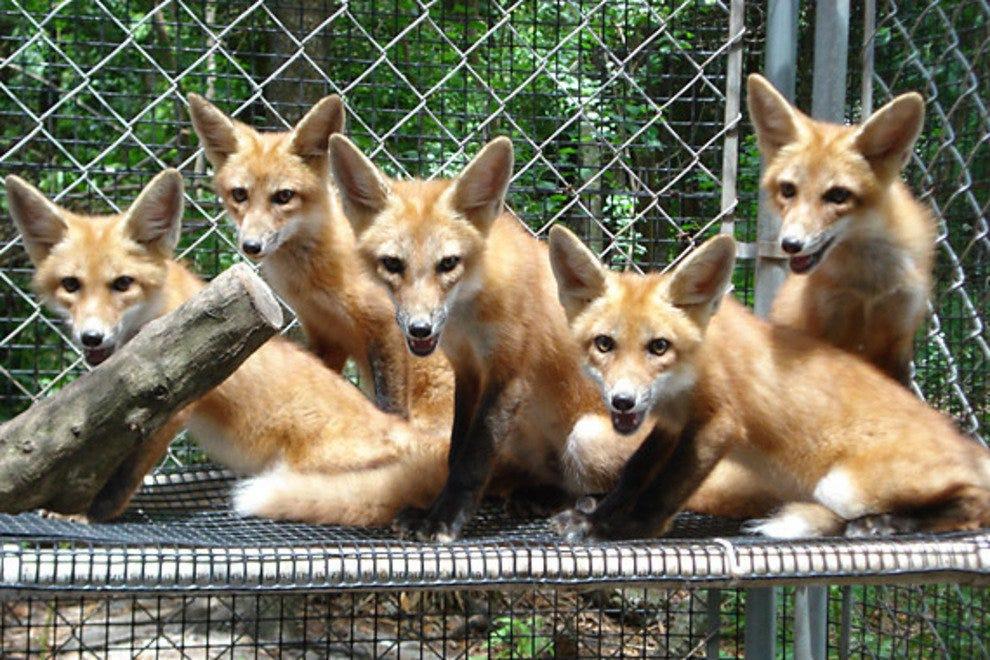 Wildlife Sanctuary of Northwest Florida: Pensacola Attractions