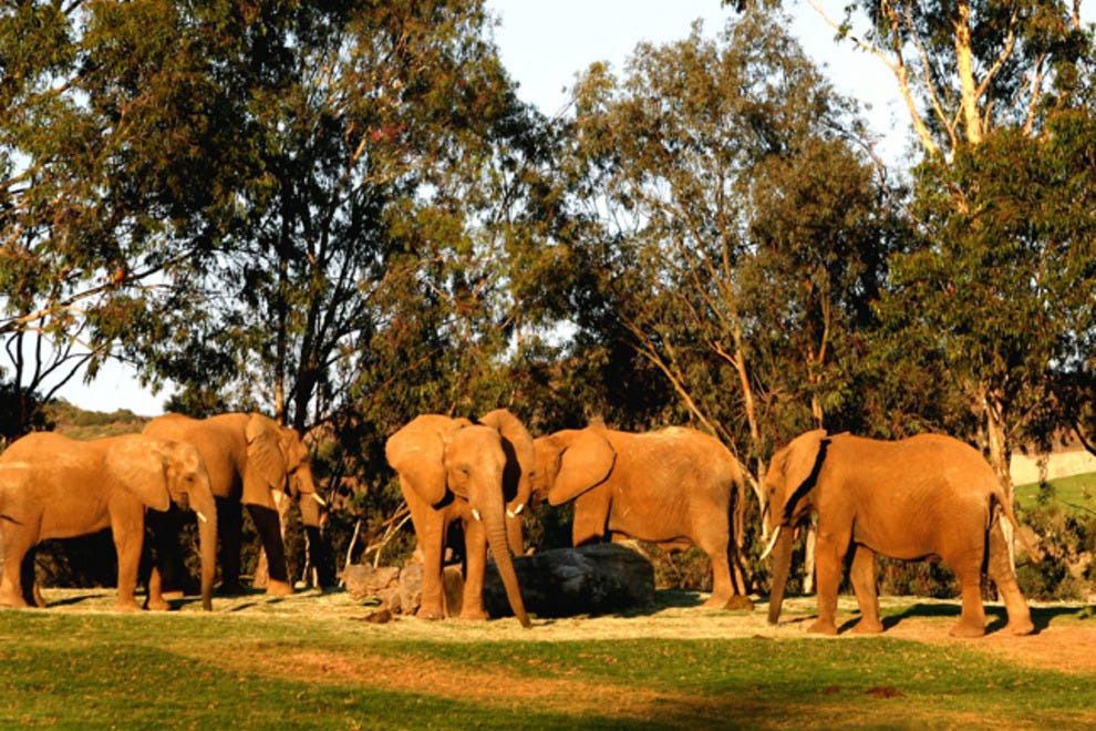 San Diego Zoo Safari Park: San Diego Attractions Review - 10Best ...