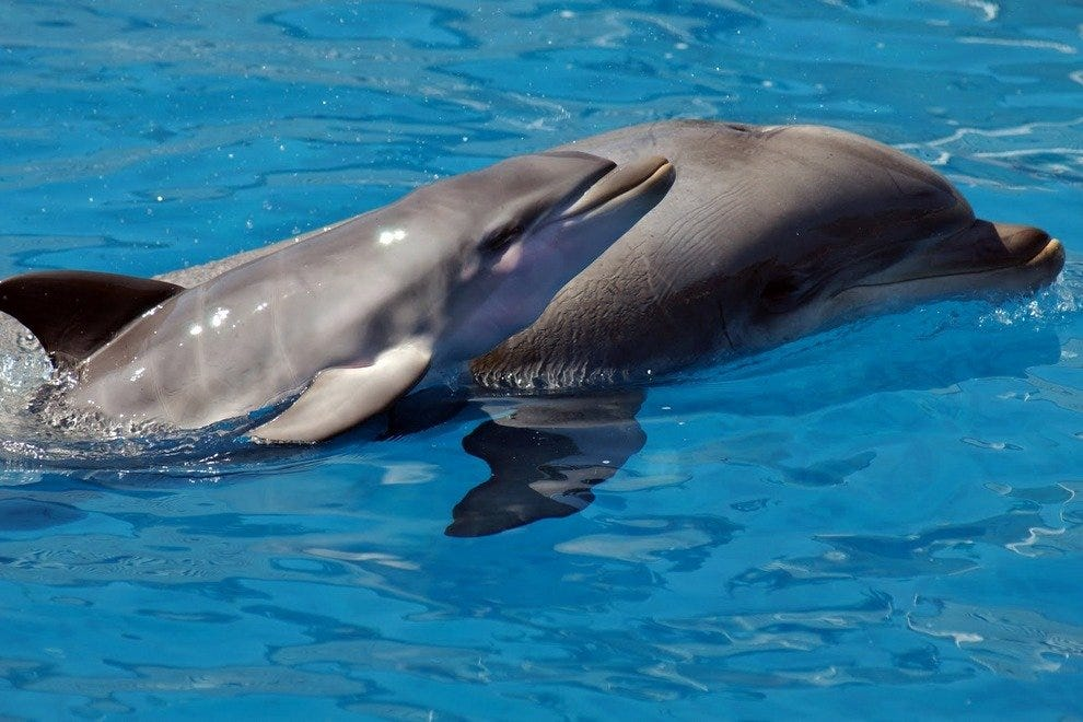 Southern Star Dolphin Cruises: Destin Attractions Review ...
