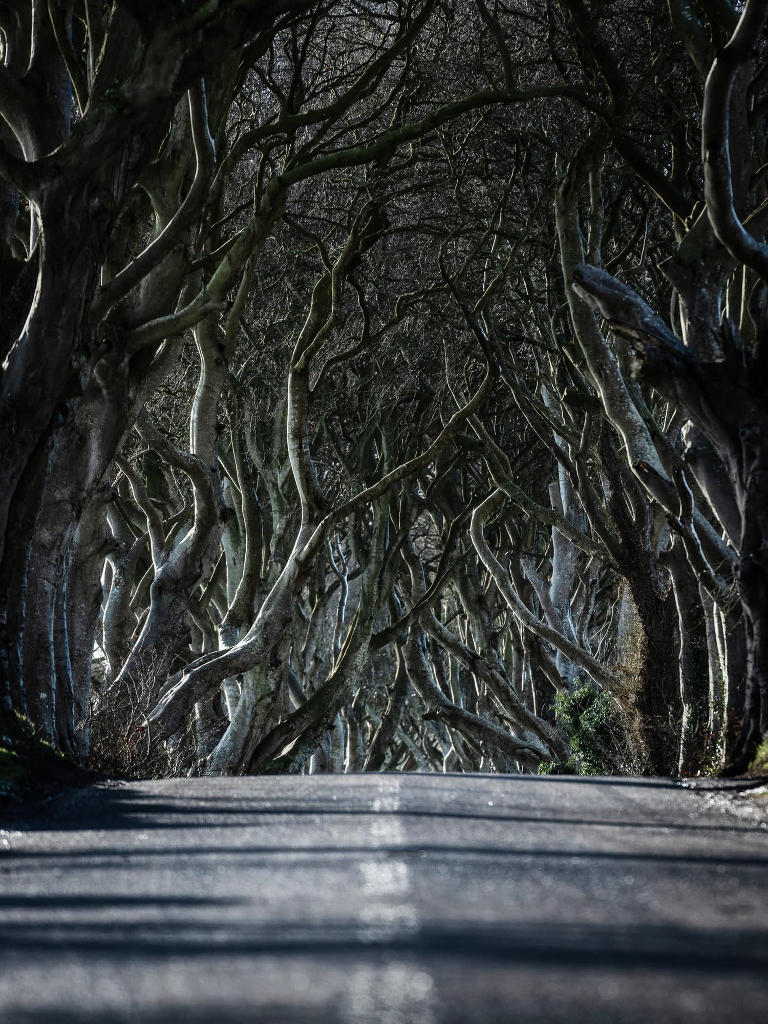 A road leading through the dark hedges Northern Ireland, United Kingdom.